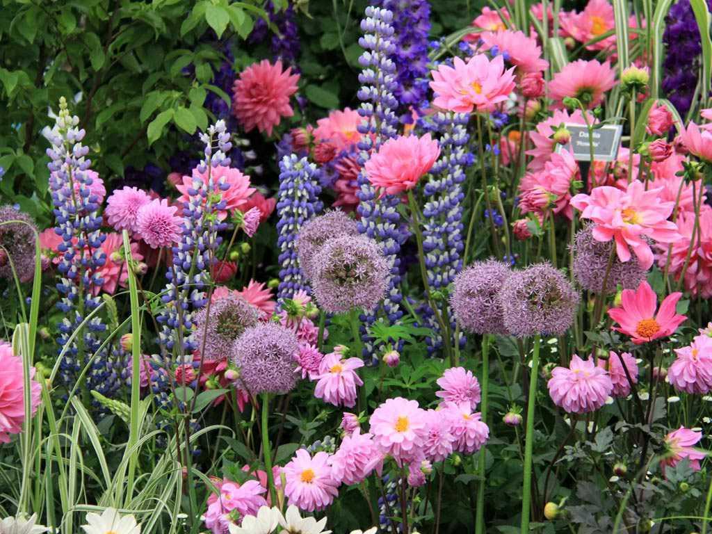 RHS Chelsea Flower Show ffionas Restaurant in Kensington